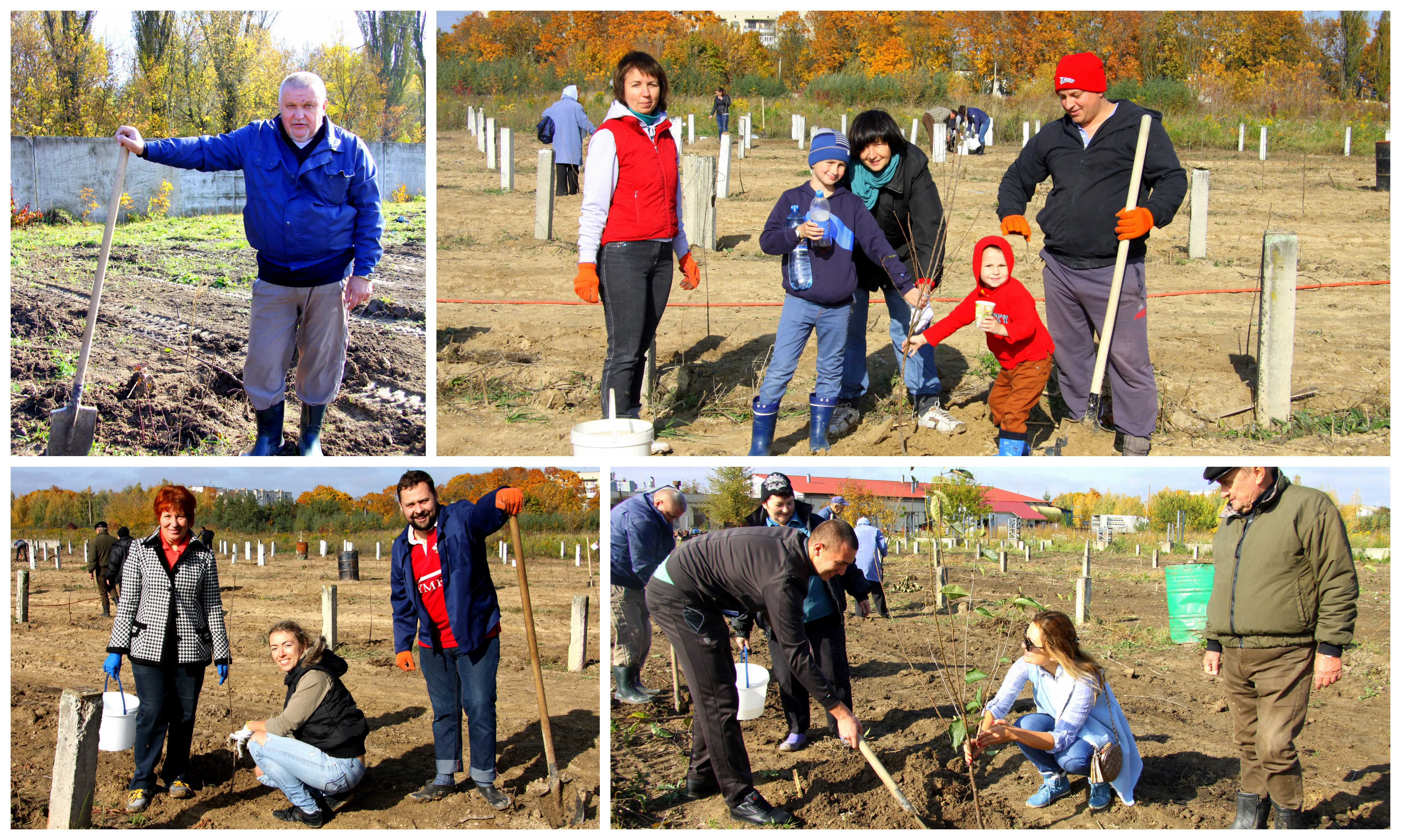 Planting a cherry garden by collective of LTD. of VTP «Agropererobka»